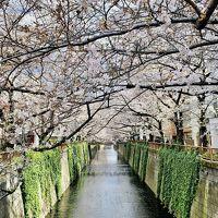 2020年3月 春旅 桜を探して有給消化日を楽しむ