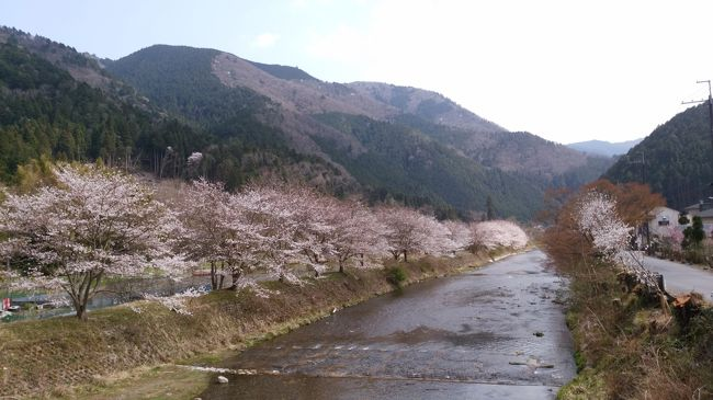 東京から高速バスに乗って京都へ行きました。<br />一度訪れてみたかった京都大原の朝市です。<br /><br />夜桜見物中に、自宅からのSOSが入りました。<br />家族の調子が悪いので、病院に連れて行かなくては!<br />ということで、翌日の朝に帰ることに。<br /><br />慌てるとダメですね・・・。カメラを失くしました。<br />スマホだけでは足りないかと、小さなカメラも同行していたのですが、どこで失くしたのか・・・荷物の中にありませんでした(大泣)<br /><br />それでも家族の病状が思ったより軽く、その後回復したので、<br />めでたし~めでたし「バタバタ旅」です。<br />