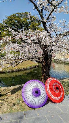 18きっぷで桜咲く佐賀県を弾丸で