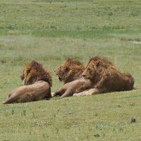 ンゴロンゴロ自然保護区周辺