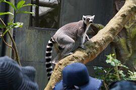 動物ずくめのシンガポールひとり旅 16 シンガポール動物園 儚い森の部