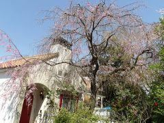 風見鶏が上がる洋館に咲く紅枝垂れ桜