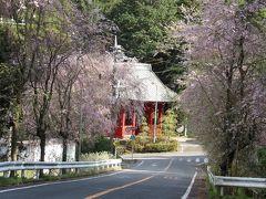 大雄山最乗寺仁王門横の枝垂れ桜の並木道