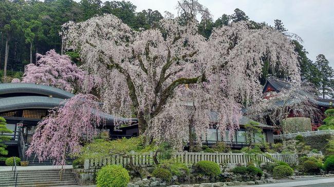 春の18きっぷの期限は4月10日となっています。<br />都内のソメイヨシノも既に葉桜、<br />東京から朝遅めに出ても行ける場所を探してみると<br />山梨の身延山が良さそうです。<br />東海道線で富士まで行き、身延線に乗り換えます。<br />帰りは甲府駅で中央線に乗り換えます。