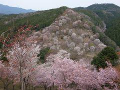吉野山の下千本と中千本の桜を楽しみました。