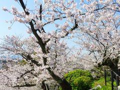 2020年 春 福岡市 桜名所巡り【桜満開の西公園内と「光雲神社」参拝など編】