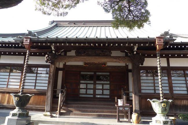 小田原市扇町1にある眼蔵寺は曹洞宗のお寺で正法山眼蔵寺という。残念ながら眼蔵寺の創建年や縁起については見付からなかった。しかし、国道255号線が横近くを通り、眼蔵寺の門前手前にも寛延3年(1750年)銘の双体道祖神(https://4travel.jp/travelogue/11614411)があることから、江戸時代に流行った大山詣での小田原からの街道に位置していたのであろう。また、境内の藤棚の藤の木は古木・巨木であり、道祖神が建立された寛延3年(1750年)には既に創建されていたことは間違いないであろう。少なくても曹洞宗の大寺院・大雄山最乗寺(https://4travel.jp/travelogue/11609049)が創建された応永8年(1401年)を上回ることはないであろう。<br /> そうした江戸時代からの歴史があったために、明治6年(1873年)にはここ眼蔵寺に成美館(公立小学校)が創始されたのだろう。<br /> 眼蔵寺は川に囲まれており、一見、お堀のようにも見える。電車から境内に咲いている枝垂れ桜の花が見えるのであるが、単線とはいえ大雄山線の線路で遮断されており、井細田駅横の踏切を渡って国道255号線を通り、山王川を渡り、右折して線路と国道の中間にある道路を戻るとかなり奥に巌蔵寺の門前が見えてくる。井細田駅とは直線距離では200m程度であるが、この道では800m程度はあろうか。少なくても井細田駅横の踏切とその南側にある踏切は私立芦子小南側までなく、この間は500m弱の線路長がある。一言でいえばプチ陸の孤島のお寺である。<br /> 井細田駅で下車してようやく辿り着くと枝垂れ桜が迎えてくれる。あるいは染井吉野も満開である。おそらくはこうした桜が散った後なら、藤棚の下で藤の花で癒されるであろう。<br />(表紙写真は眼蔵寺本堂)