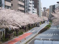 恵比寿散歩!桜満開