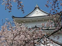 小田原城の桜 2020.4.4