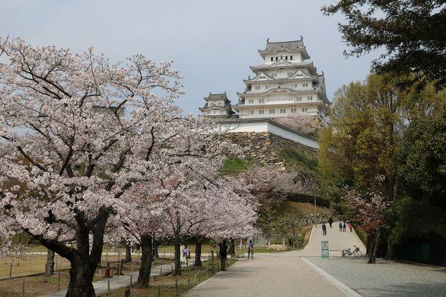 この時期、毎年花見に出かけている姫路城へ行ってきました。<br />今年は新型コロナウイルスの影響で、城内での飲食は禁止となり、写真撮影のみとなってしまいました。<br />そのせいか観光客や花見客も少なく、写真撮影のみであればいろいろな角度から写すことが出来、きれいな写真を撮ることが出来ました。<br />ただやはりこの時期、桜とお城を眺めながら美味しい弁当やお酒が飲めなかったのが残念です。<br />今年の桜は開花は早かったものの満開になるのが遅れて全体としては8分咲き程度でした。<br />開花後寒い日が続いたので満開が遅れ、例年通り10日頃まで楽しめそうです。