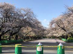 無観客の桜並木@上野公園