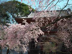 桜を撮りに京都へ<醍醐寺>