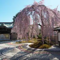 桜を撮りに京都へ<午後は高台寺>