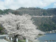 奥琵琶湖 湖西の桜・海津大崎の桜・奥琵琶湖ドライブウエーの桜