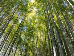 鎌倉/湘南ぐるり旅【16】~魅惑の竹林に心癒される~報告寺