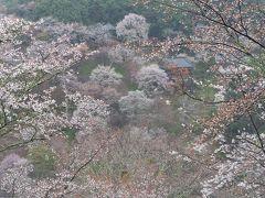 2020 関西 春