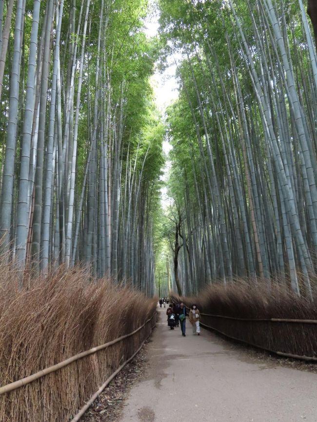 COVID-19対策の自主隔離を終えて☆京都最終日-2. 嵯峨野で桜見物