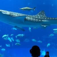 2020年 沖縄本島 観光と座間味へダイビング part3