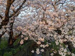鎌倉花の散歩道 2020年春