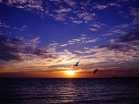 4トラで得た情報でクオッカに会いに ⑥パースからキングスパークとインド洋の夕陽フリーマントル