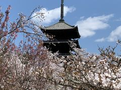 城下町旅ラン⑮桜の季節に嵐山から金閣寺・京都