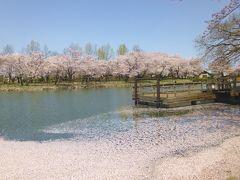 太田ヶ谷沼の静かな春