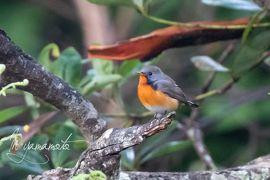 Sri Lanka 探鳥記No2