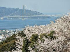 一面を桜色に染める須磨浦山上遊園の桜