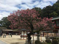 福岡・山口遠征 (その6) 太宰府② あ~あ、満開を見たかったなあ。太宰府の梅!
