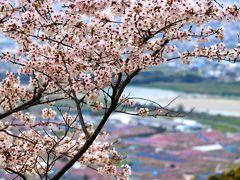 近場の桜と桃の花を求めて(竜門橋・最初ケ峰)