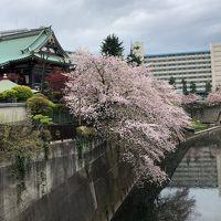 健康増進(肩こり回復・体脂肪減少目的)桜を見ながらウォーキング