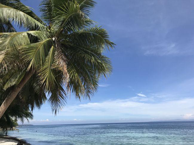今回は2018年にセブ島に行った時の旅行記になります。<br />初めてのセブ島ではジンベイザメと泳いだり、ちょっといいホテルに泊まったり、ショッピングを満喫しました。<br /><br />2日目はジンベイザメと泳ぎに行く予定でしたが…<br />