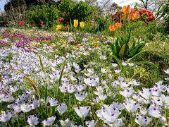 横浜市児童遊園地やこども植物園の花々2020年4月