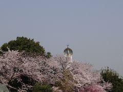お花見2020 万博記念公園