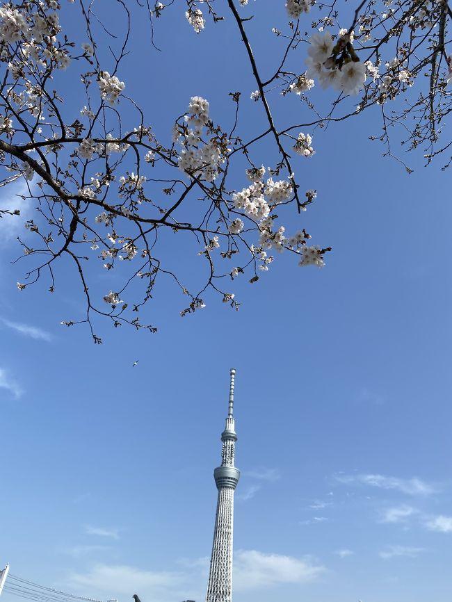 今年は桜の開花がとても早く、お彼岸にはお花見が楽しめる状態でした。<br />しかし!新型コロナウイルスの影響でお花見も自粛されていて(´・ω・`)<br /><br />そのためいつもより人出は少なくなっていましたが、お天気の良かった三連休に隅田川、そして夜の石神井川へ出掛けてみました。<br /><br />この春のお出かけはこれが最後になるのかも・・・