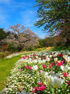 ☆春のお散歩♪リベンジはままつフラワーパーク~後編2020☆