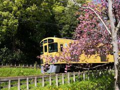 ☆2020年 春が来た! 散歩に行こう!☆4月 今年の桜は早い。北山公園 八国山緑地 No4