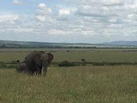 ロンドン・ナイロビ出張(その39) 12日目-4 おまけのマサイマラ、ナイロビへの陸路② 保護区の中を移動!