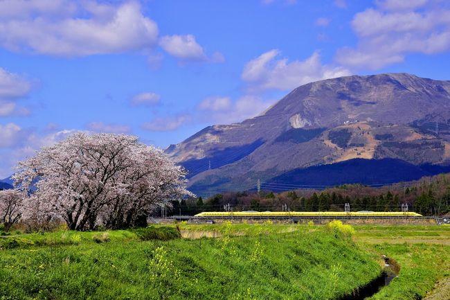 近江長岡周辺に咲き広がる満開な桜と春の伊吹山の風景を探しに、沿線の桜の名所を散策してみました。