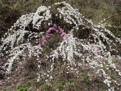 花もも街道「昼神温泉」