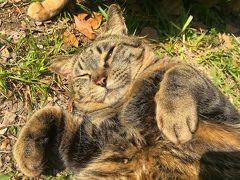 コロナで自粛中!大阪城の城猫ちゃんに癒され日記☆Part2