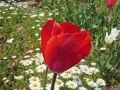 四日市中央郵便局に出かけました。中央小学校の花壇に咲いてるチューリップが見れてとても嬉しかった。