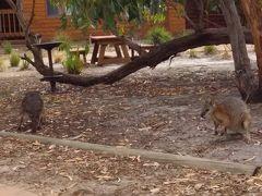オーストラリア カンガルー島(2017年年末年始)。。。その1「アデレードからカンガルー島へ」