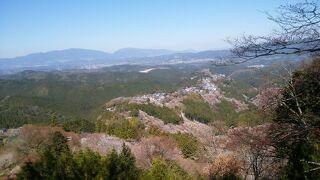 桜の吉野山