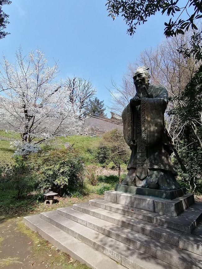 湯島聖堂で、中国古典の一分野を学んでいます。ちょうど講義が終わった後、桜があまりに美しく、また建物や環境に合っていたので、ひととおり逍遥したことから、ご紹介します。<br /><br />天気にも恵まれ、この日歩いて、なごやかな気持ちになりました。<br />この湯島聖堂のある地には、江戸時代の17世紀末に昌平坂学問所が創建されました。儒学を学ぶ大学です。明治になり、博物館、師範学校が生まれ、現在の東京国立博物館、筑波大学(前東京教育大学ーまた韋駄天で出てくる嘉納治五郎が校長を務めた東京高等師範学校)などの前身です。
