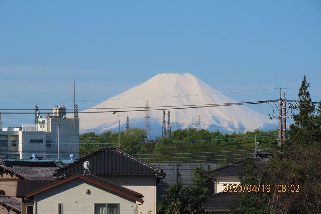 4月19日、午前8時頃にふじみ野市より素晴らしい真っ白な富士山が見られました。 この時期にしては珍しい富士山でした。<br />前日の大雨により沢山の降雪があったためと思われます。<br /><br /><br /><br /><br />*写真は素晴らしい真っ白な富士山