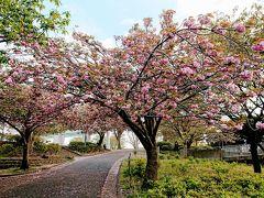 在宅太り解消に 4月21日の清水ケ丘公園散歩