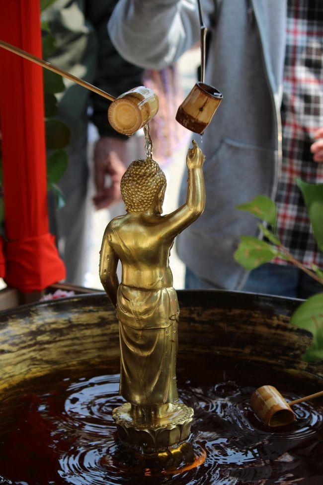 3日め 21986歩<br /><br />今日は佛生会!<br />神さまにも仏さまにもすがりたい現状に、奈良の興福寺にも参列する人が参集しました。そうそうTVカメラも来ていました。<br />誕生仏のお釈迦さまに甘茶を灌いだ経験はありますが、最初から法要に参加したのは初めての体験でした。<br />今は日本人以外のお坊さんも多いんですね…<br /><br />奈良にもお気に入りのお店があります。<br />ならまちにある「粟」、大和野菜が食べられます。<br />こんな時でも混雑、女子に人気のお店なのです。<br /><br />ホテル … 国際会館駅 → 近鉄奈良駅 … 興福寺 … 福智院 … ランチ:粟ならまち店 … 白毫寺 … 春日大社参道 … 近鉄奈良駅 → 近鉄京都駅 → 国際会館駅 … 夕食:ゆば泉 … ホテル<br /><br /><br /><br />