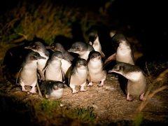 タスマニアの旅⑤ 「ビーチフロントビチェノ」に泊まってペンギンパレードを見る