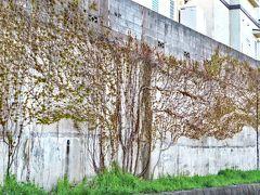 Japan 空堀川と奈良橋川の鳥たち